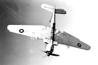 Royal Navy Blackburn Firebrand III Air to Air